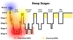 фазы сна